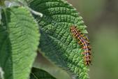 蟲蟲雜拍:DSC_7492.jpg