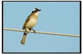 鳥類:DSC_3996.jpg
