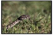 蛇來蛇去:_MG_1016.jpg