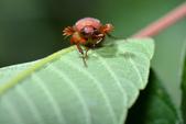 蟲蟲雜拍:DSC_9768.jpg