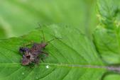 蟲蟲雜拍:DSC_7809.jpg