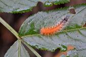 蟲蟲雜拍:DSC_5082.jpg