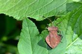 蟲蟲雜拍:DSC_0540.jpg