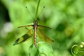 蟲蟲雜拍:DSC_0531.jpg