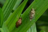 蟲蟲雜拍:DSC_0604.jpg