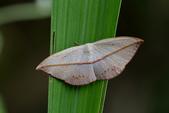 蟲蟲雜拍:DSC_9680.jpg