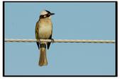 鳥類:DSC_4012.jpg