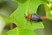 蟲蟲雜拍:DSC_9859.jpg