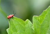 蟲蟲雜拍:DSC_7611.jpg