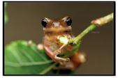 蛙類集合:DSC_5341.jpg