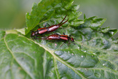 蟲蟲雜拍:DSC_5086.jpg