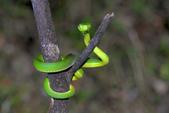 蛇來蛇去:DSC_1292.jpg