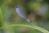 蟲蟲雜拍:DSC_5107.jpg