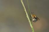 蟲蟲雜拍:DSC_0301.jpg