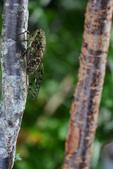 蟲蟲雜拍:DSC_0654.jpg