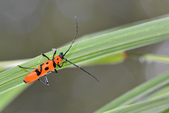 蟲蟲雜拍:DSC_0667.jpg