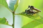 蟲蟲雜拍:DSC_9615.jpg