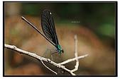 蟲蟲雜拍:DSC_0240.jpg