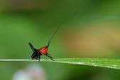 蟲蟲雜拍:DSC_9817.jpg