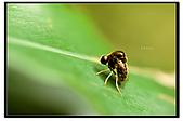 蟲蟲雜拍:DSC_0261.jpg