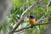 鳥類:DSC_5937.jpg