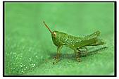 蟲蟲雜拍:DSC_0043.jpg