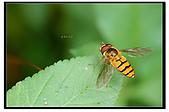 蟲蟲雜拍:DSC_0304.jpg