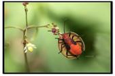 蟲蟲雜拍:_MG_0081.jpg