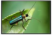 蟲蟲雜拍:DSC_0297.jpg