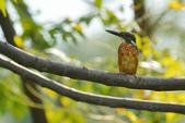 鳥類:DSC_5022.jpg