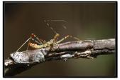 蟲蟲雜拍:_MG_1116.jpg