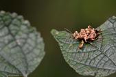 蟲蟲雜拍:DSC_6320.jpg