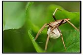 蟲蟲雜拍:DSC_0331.jpg