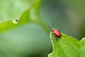 蟲蟲雜拍:DSC_7610.jpg