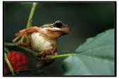 蛙類集合:DSC_5382.jpg