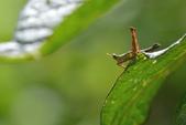蟲蟲雜拍:DSC_6330.jpg