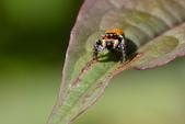 蟲蟲雜拍:DSC_7397.jpg