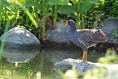鳥類:DSC_5008.jpg