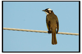 鳥類:DSC_3998.jpg
