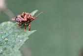 蟲蟲雜拍:DSC_1714.jpg