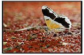 蟲蟲雜拍:DSC_1595.jpg