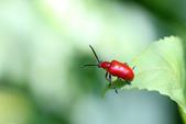 蟲蟲雜拍:IMG_1594.jpg