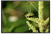 蟲蟲雜拍:_MG_1234.jpg