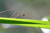 蟲蟲雜拍:IMG_1546.jpg