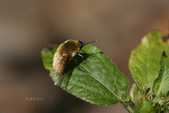 蟲蟲雜拍:IBIN2250.jpg