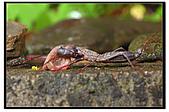 蟲蟲雜拍:DSC_1648.jpg