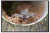 蟲蟲雜拍:DSC_1650.jpg