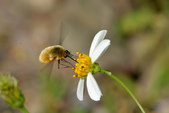 蟲蟲雜拍:DSC_6362.jpg