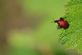 蟲蟲雜拍:DSC_7408.jpg