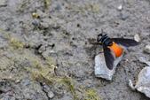 蟲蟲雜拍:DSC_1754.jpg